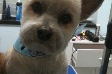 Pet Central Grooming 511