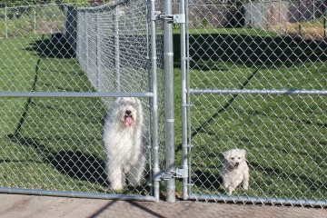 pet-central-boarding-yards-gates