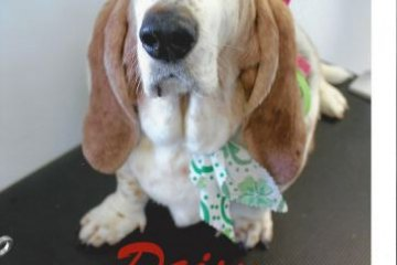 Daisy Pet of the Month June 2014