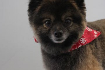 Grizzly Pet of the Month June 2013