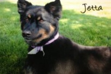 Jetta Pet of the Month July 2013