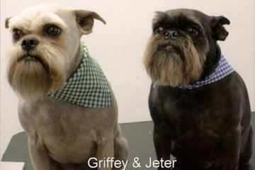 Griffey & Jeter Pets of the Month for October 2012